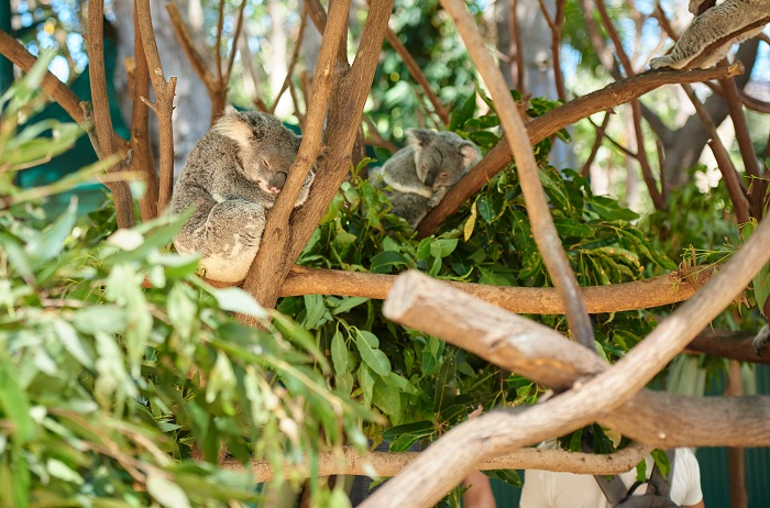 Embrace koalas, feed kangaroos, and get in touch with animals